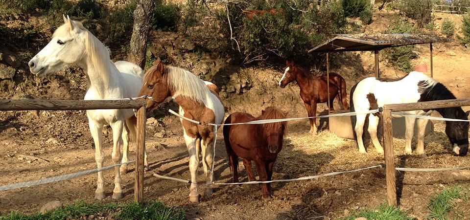 kolima-caballos